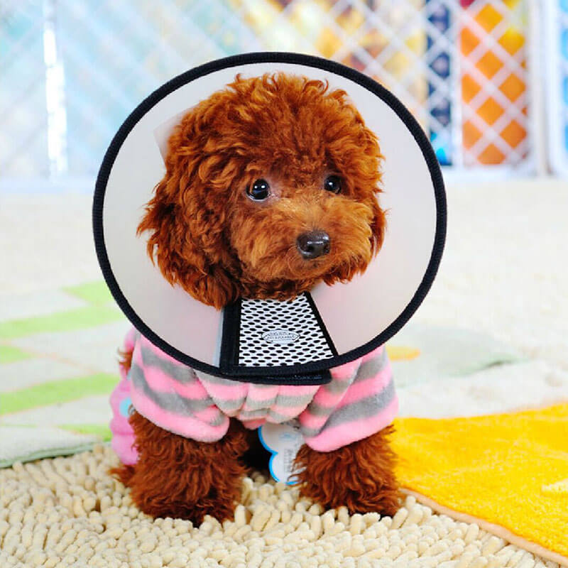 Buy Recovery Cone Collar for dog or cat in Kenya on spawtive for small dogs