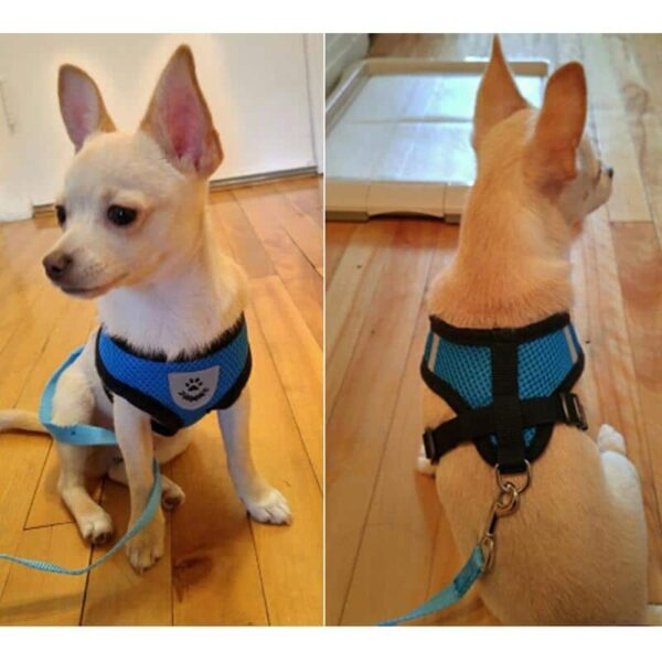 Petsasa-Breathable-Dog-Lead-Harness-Cat-Harness-Chest-Strap-Pets-Dog-leash-Dog-Harness-Pet-Leash-pet-Rope