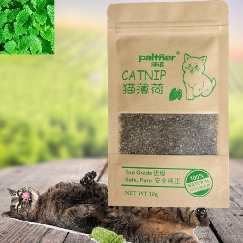 Buy-Cat-Catnip-On-Spawtive.co.ke-Nairobi-Kenya