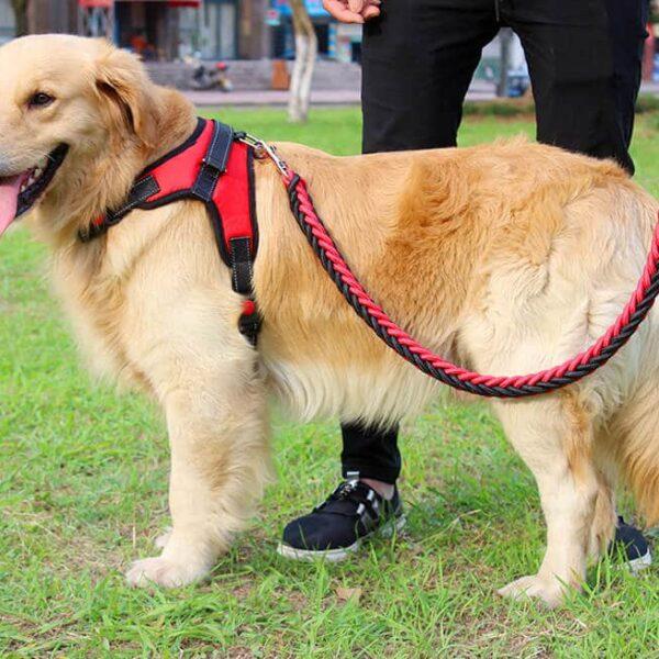 Petsasa red Strong Dog Leash and Harness Set