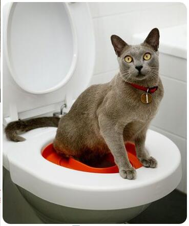 c Cat-training-Toilet-Syastem-Seat-Pet-Plastic-litter-Box-Tray-Kit-Professional-Trainer-In-Kenya-Spawtive.co.ke