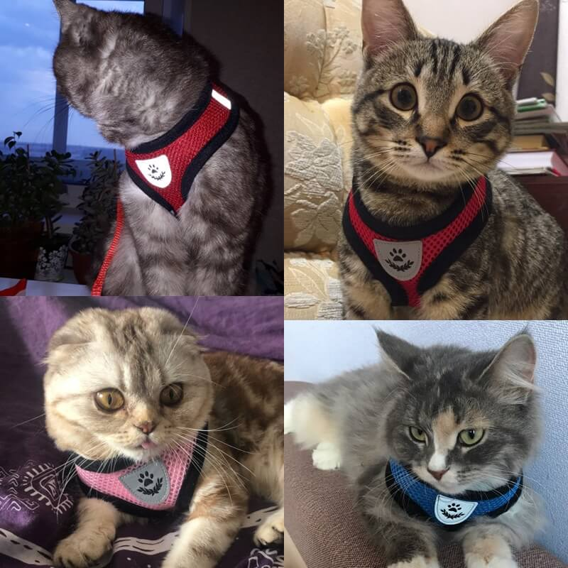 Cats Wearing Spawtive Breathable Mesh Cat Pet Harness and Leash Set in Kenya