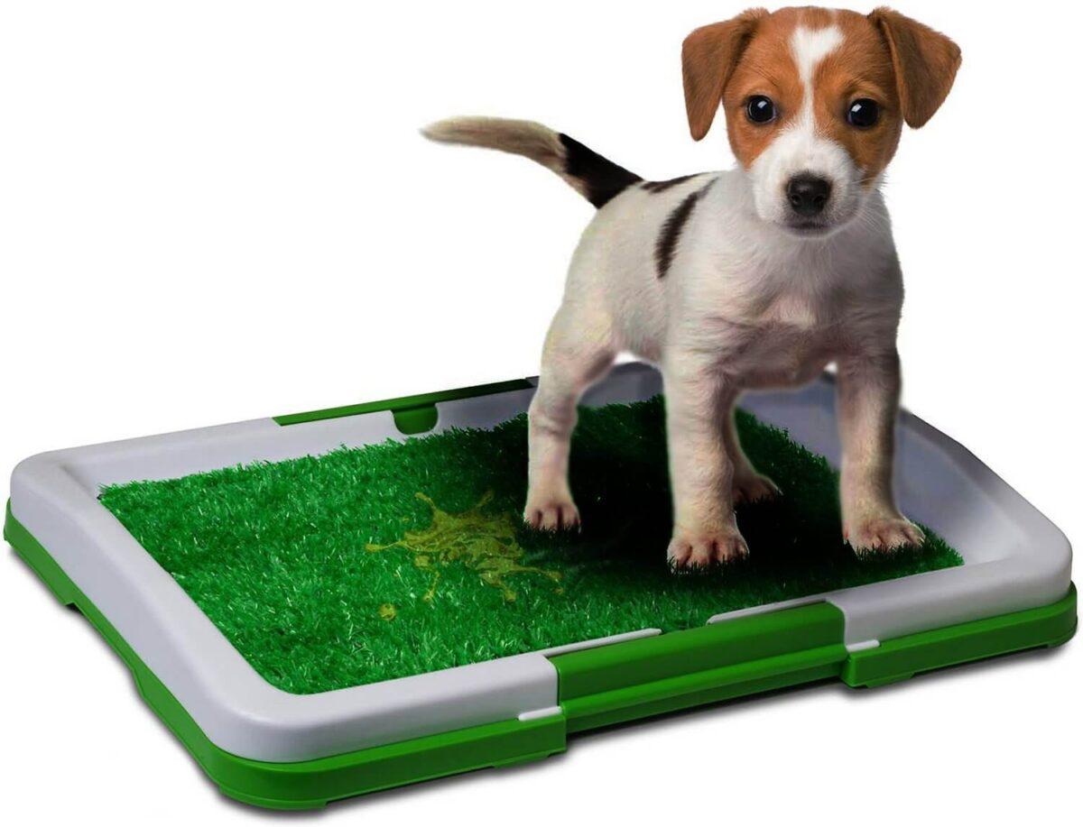 Buy Dog Toilet Potty Trainer Pad Holder
