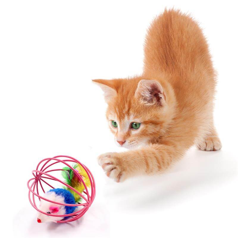 Best PetSasa Interactive Rolling Feather Cage Cat Toy