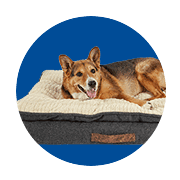 Dog Beds & Furniture