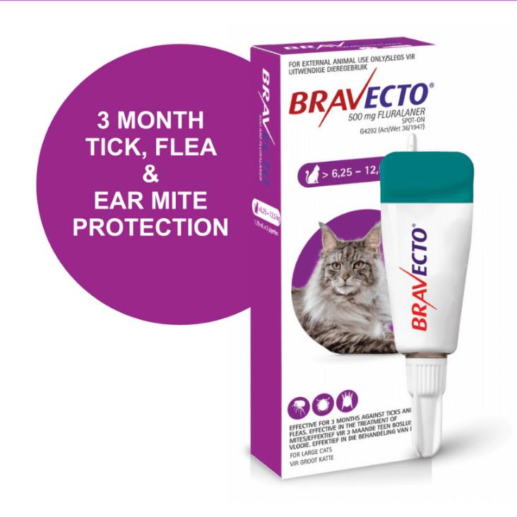 Petsasa-Kenya-Bravecto Spot On For Large Cats 6.25-12.5kg-flea-and-tick-solution