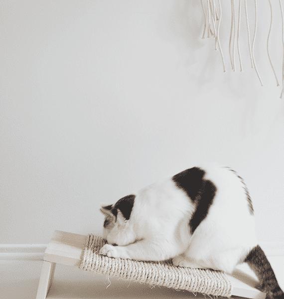 Petsasa-Purffect-cat-scratcher-cat-scratch-plank-board