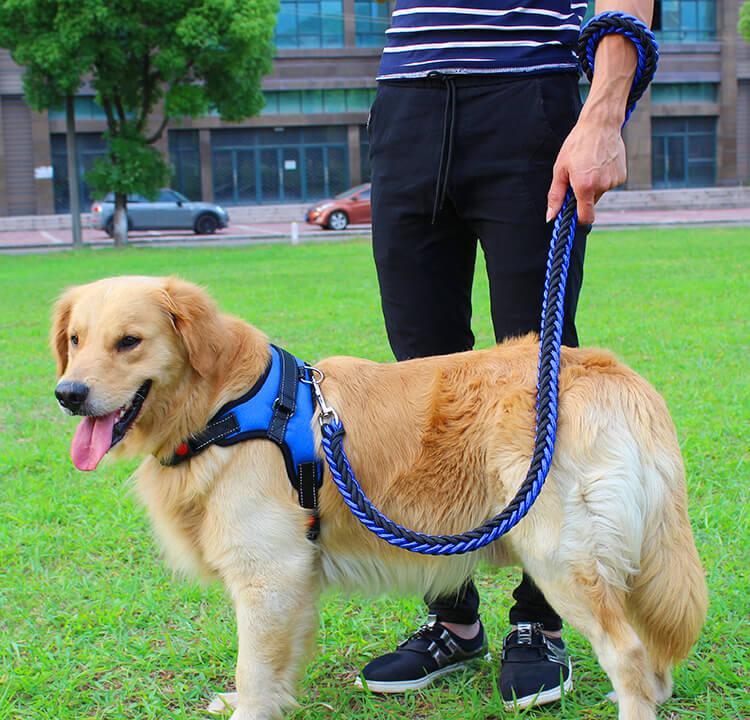Buy Double Strong Dog harness and leash in Nairobi Kenya