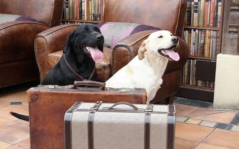 Find Pet Friendly Hotels in Nairobi Kenya on Petsasa Kenya