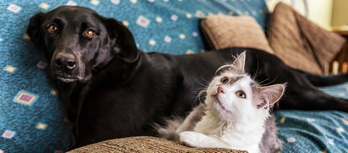 Flea and tick treatment solutions for pet cats and dogs in Kenya