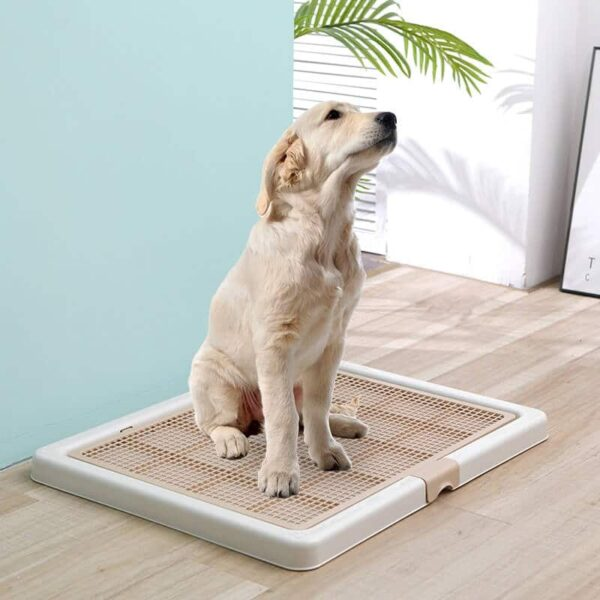 Buy Large Dog Toilet Tray Potty Training Pee Pad on Petsasa Petstore