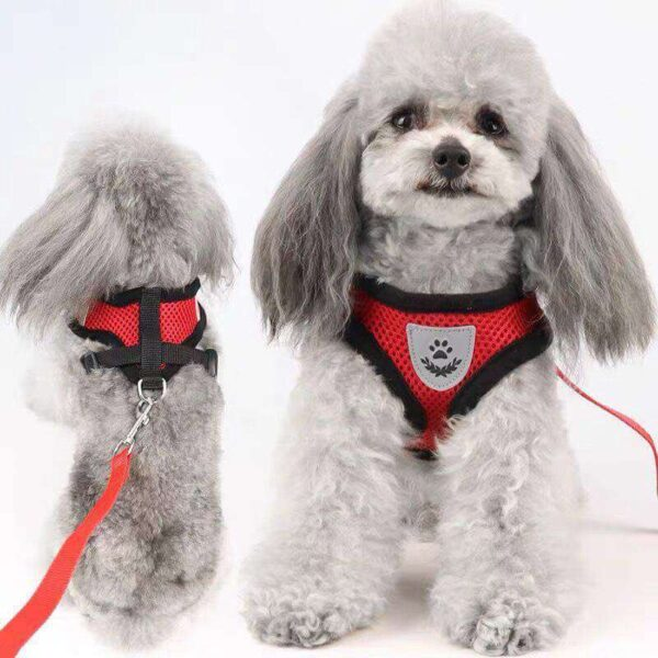 Buy Collar Harness and Leas for Small or Medium Dogs in Kenya