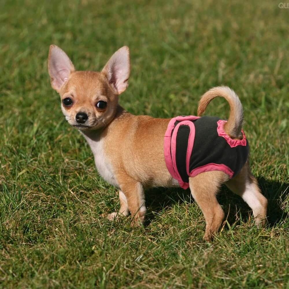 Buy Washable Female Dog Diapers for puppy or small dog with urine problem in Pet house Kenya