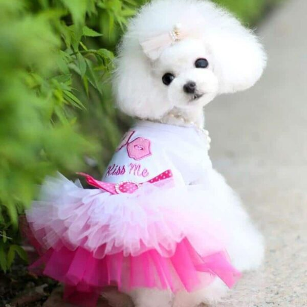 Best Cute Dog Clothes Kiss Me Lace Dog Dress, For Cats & Dogs Puppy Dress in Kenya On Petsasa