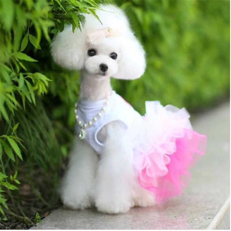 Beautiful Pink Dog Dress Pet Clothes Kiss Me Lace Dog Dress, For Cats & Dogs in Kenya By Petsasa Pet Store