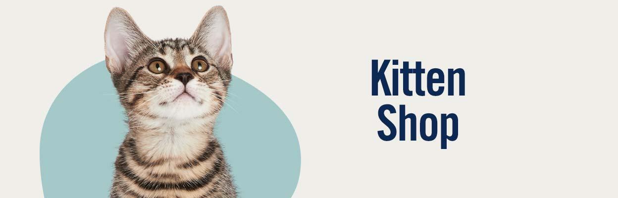 Shop New Kitten Supplies in Kenya