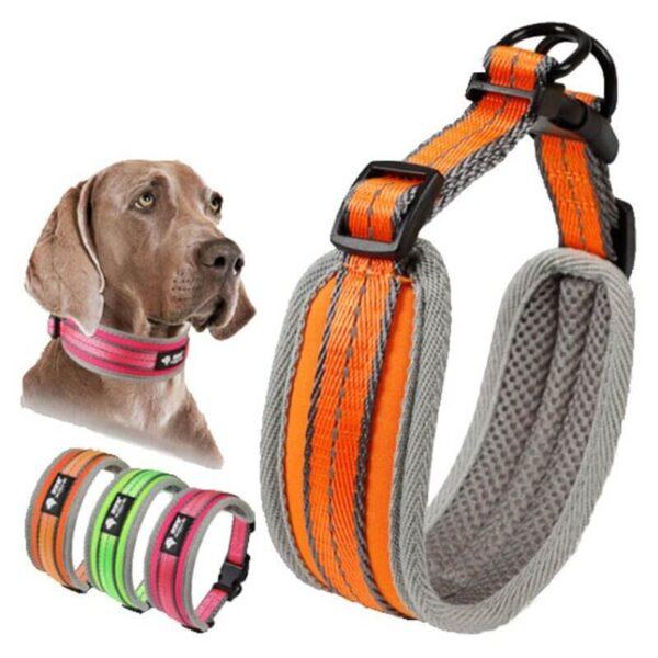 Petsasa Padded Sports Dog Collar, Adjustable, Back Clip Nairobi Kenya