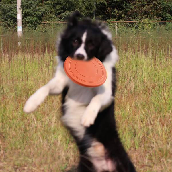 Buy Flying Disc Chase and Fetch Dog Toy in Mombasa Kenya