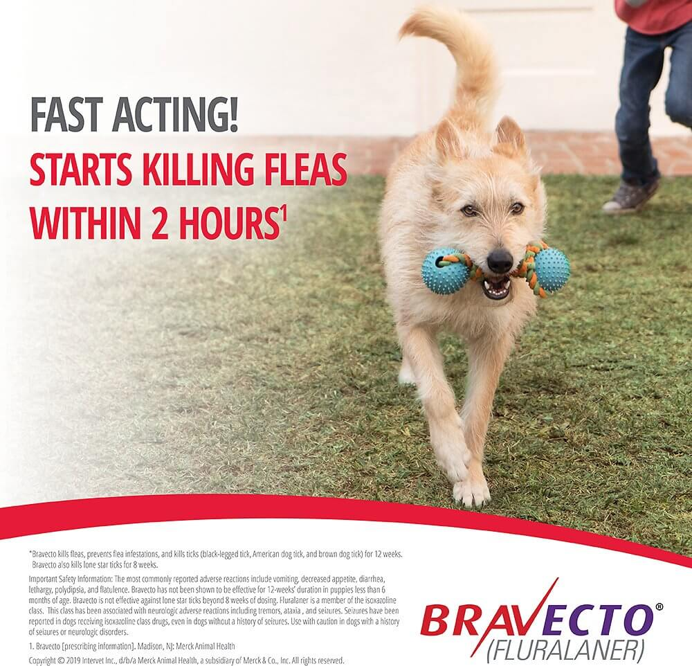 Fast Acting Flea and Tick Medicine Bravecto for Small Dogs in Nairobi Kenya